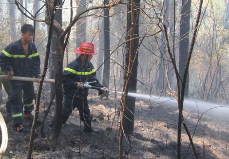 Kẻ 'đốt rừng' và nỗi niềm của những người vợ 'ươm cây'