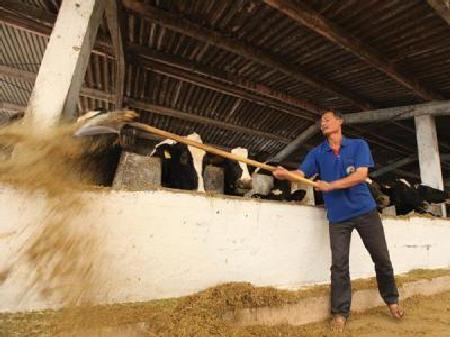 Nông dân đổ bỏ hàng tấn sữa tươi, DN chi tỷ đô nhập sữa nguyên liệu